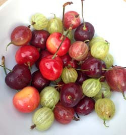 gooseberries-cherries